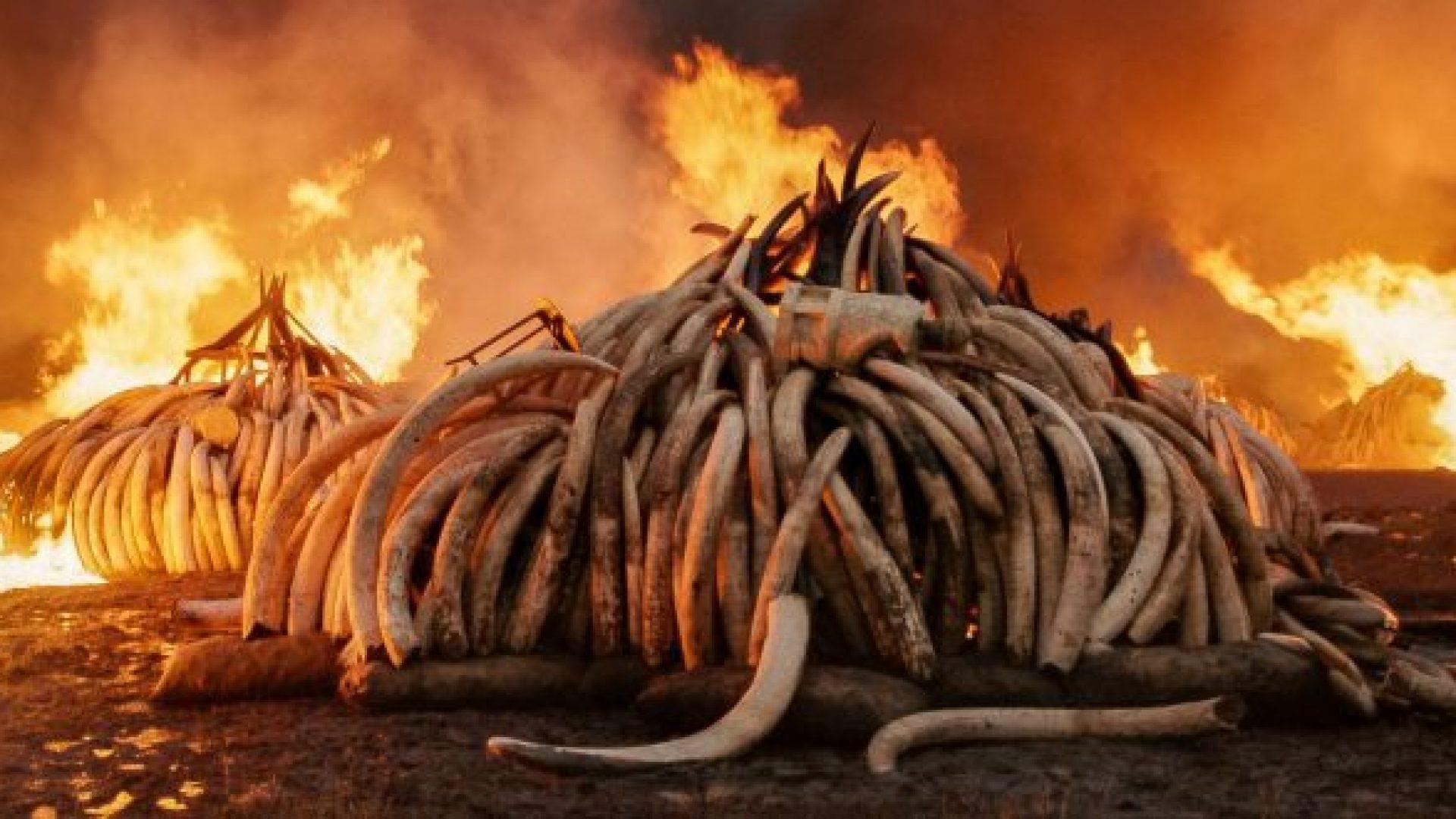 Anthropocene1320web