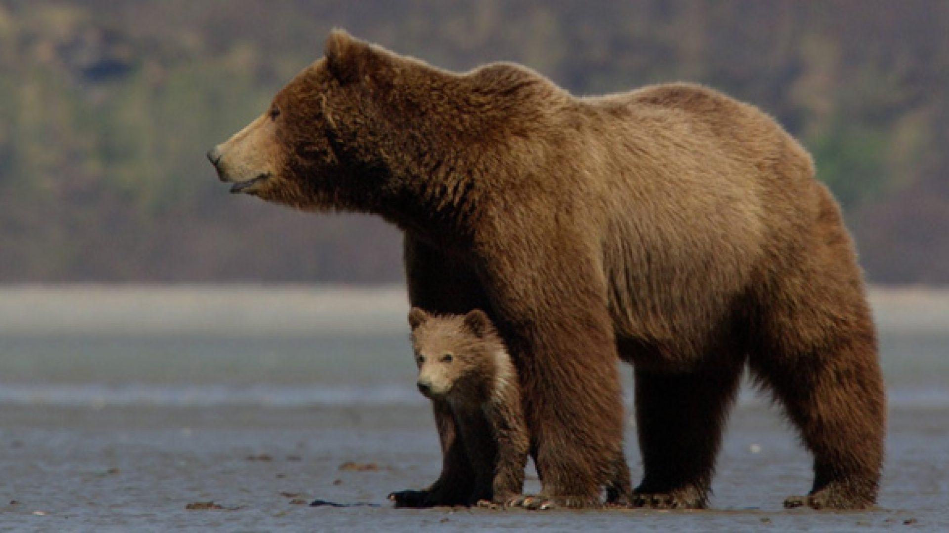 Bears660