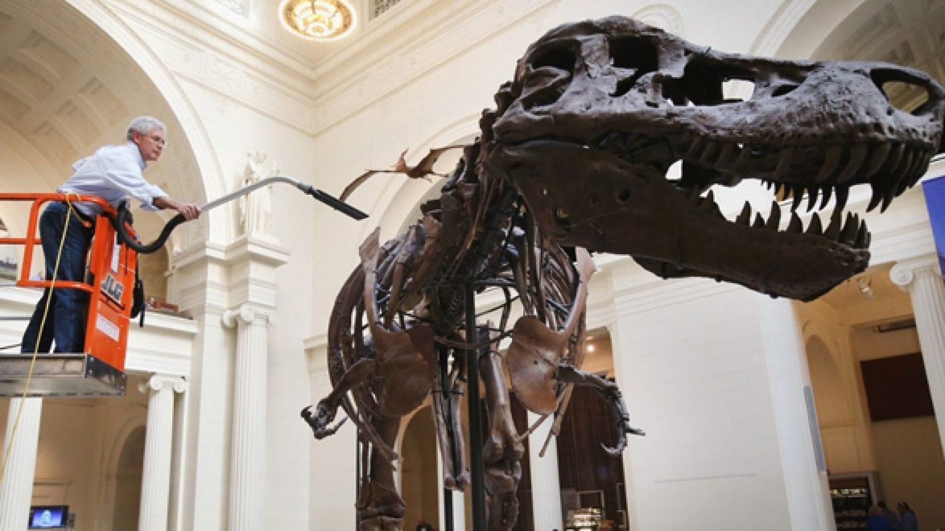 Dinosaur13660
